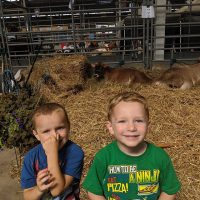 Two boys in cow barn